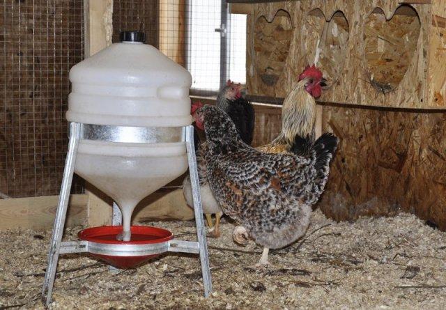 Как сделать автоматическую поилку для курицы